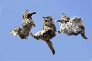 Cat_Acrobatics