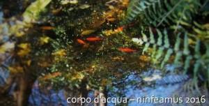 corpo d'acqua - ninfeamus 2016
